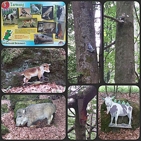 Dieren zoeken in het bos