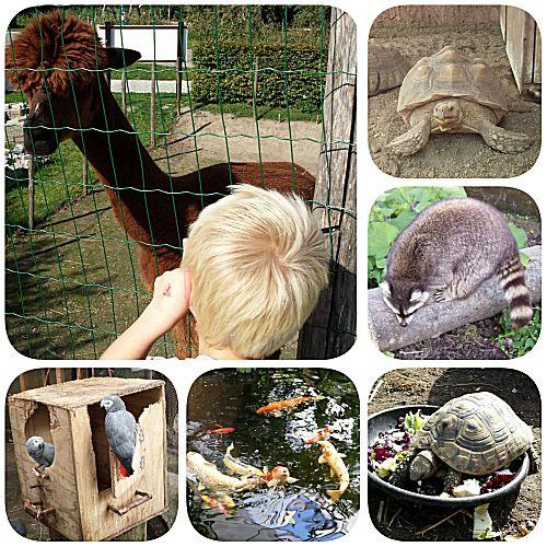 Almere jungle nog meer dieren