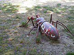 nog een groot insect