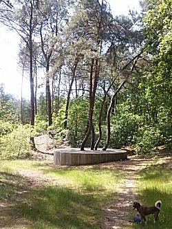 boom in het bos (je zag het bos nog)