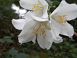 bloem dichtbij genomen