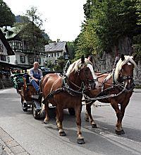 Met paard en wagen kan ook