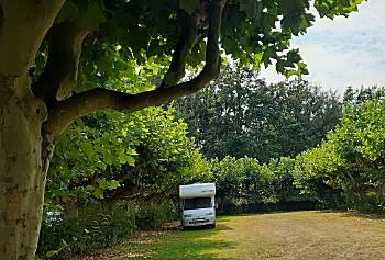 Mooie bomen op parkeerplaats