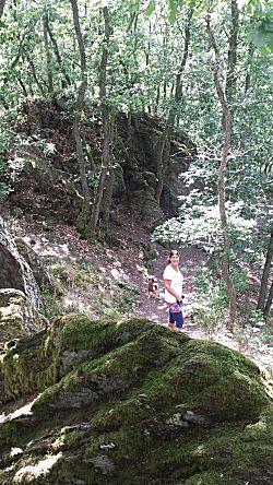 Een mooi bos in de omgeving