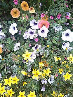 En de bloemen dichtbij