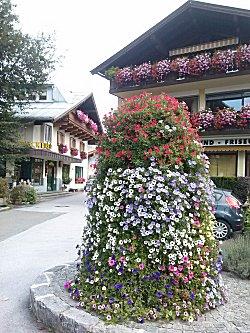 Bloemen op het plein