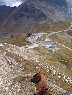 Hond geniet ook van uitzicht