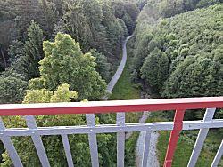 uitzicht het bos in