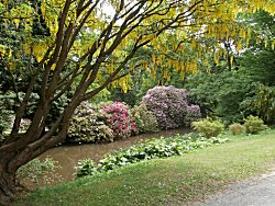 Mooie kleuren in de planten
