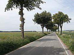 De weg voor ons