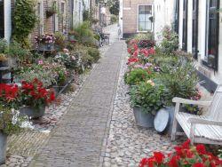 Volop bloemen in een straat in Elburg