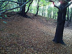 Bladeren op de grond