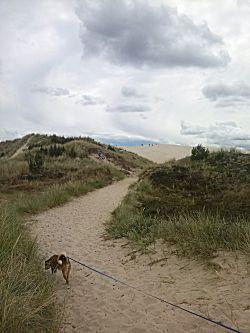 Wandelen naar Rabjerg Mile