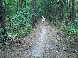 Anneke in het bos