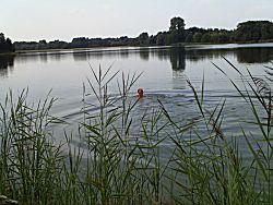Lekker zwemmen in het meer