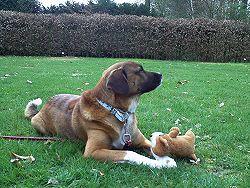 Bobby op het gras