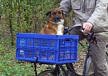 Bobby op de fiets
