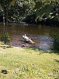In de rivier de Rur zitten