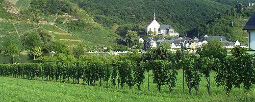 Wijnranken Ellenz-Polsterdorf